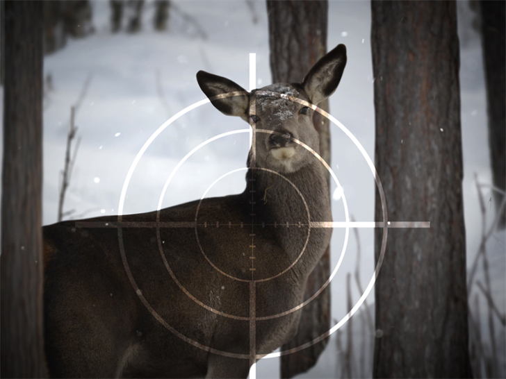 Deer hunting licenses for Wisconsin children up from 2016