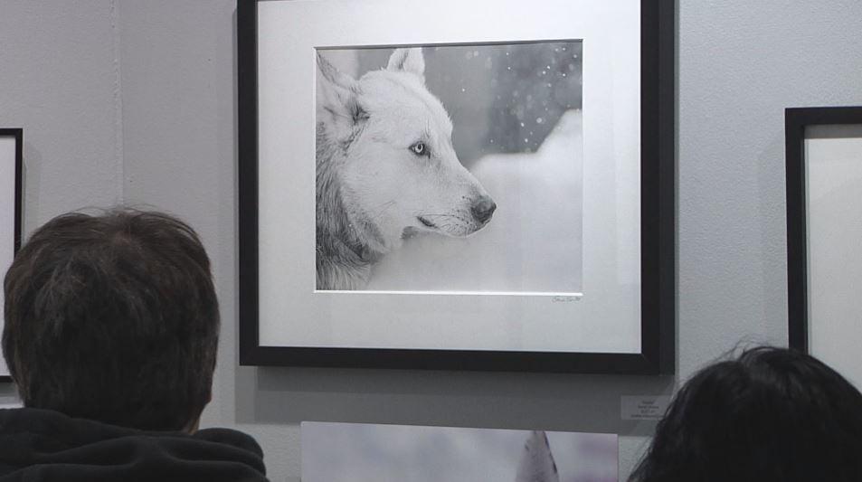 Local artists capture Beargrease Marathon highlights