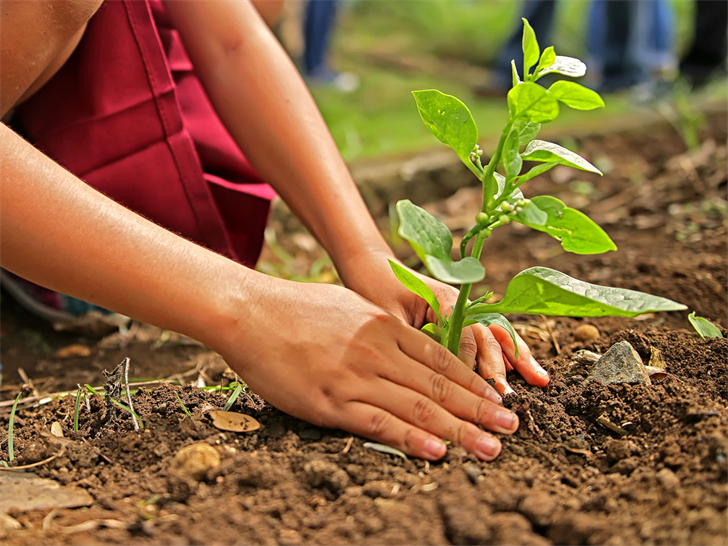 Community invited to help plant 500 trees in Duluth