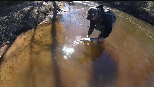 Get outdoors fishing the brule river kbjr 6 your for Brule river fishing report